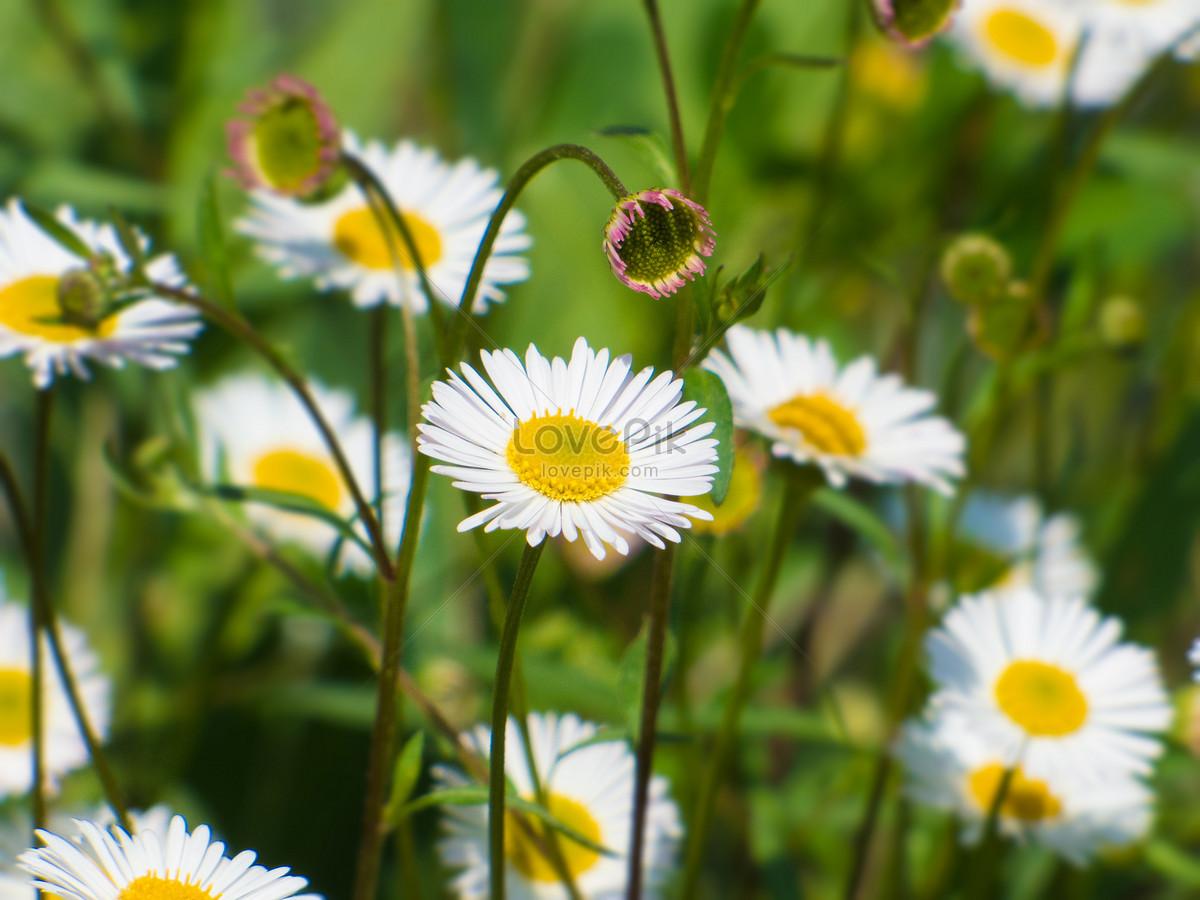 Bahar çiçek Açan çiçekler Resimfotoğraf Numarası 500306024tr