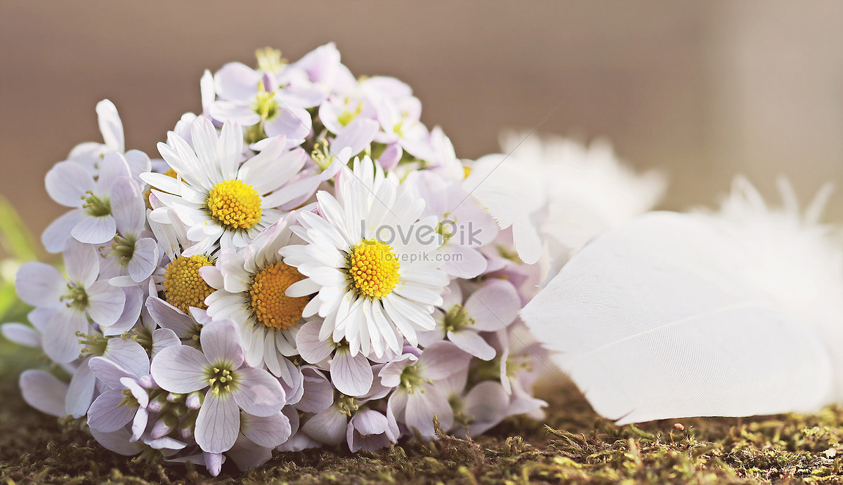 Daisy Flower Bouquet Photo Imagepicture Free Download
