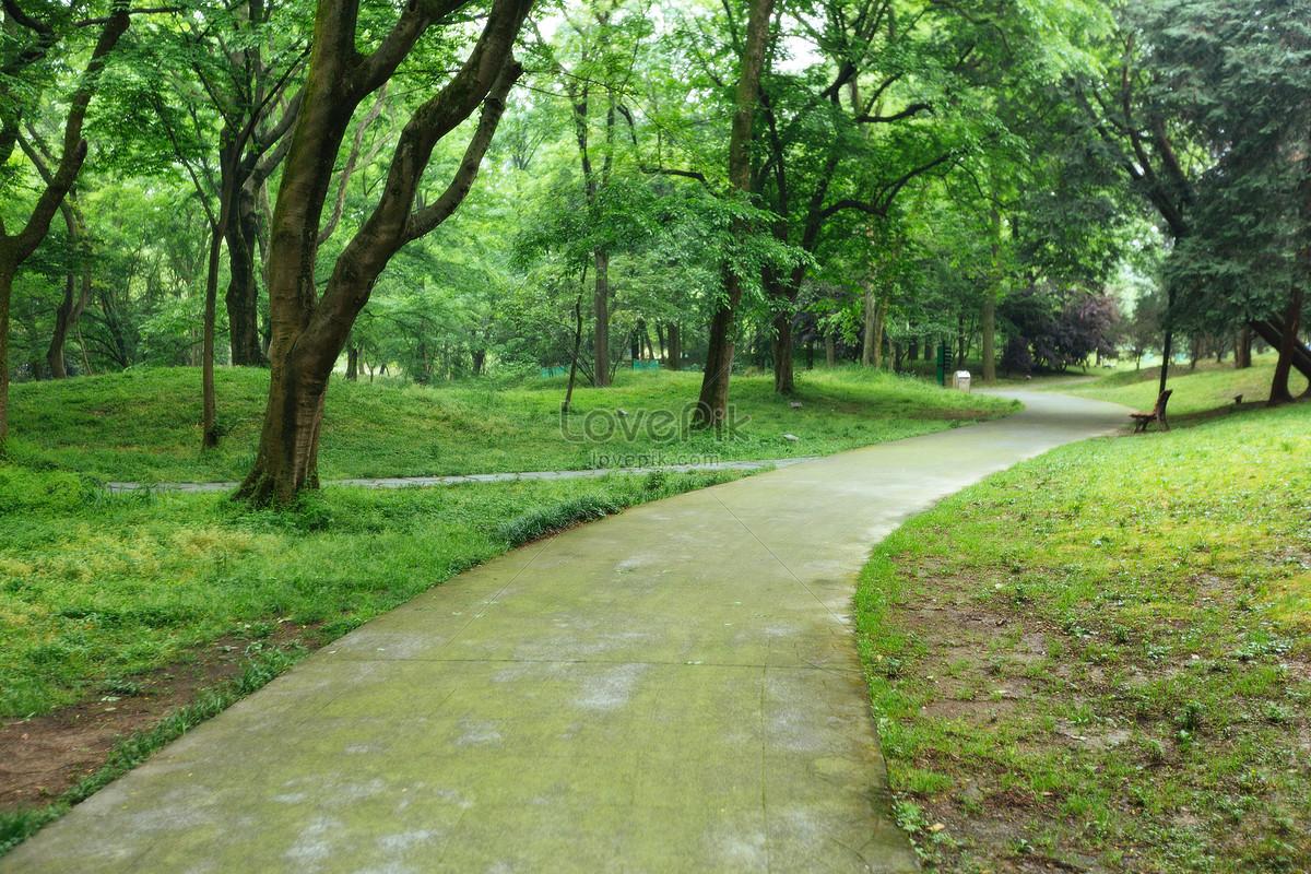 vườn cây xanh cảnh quan