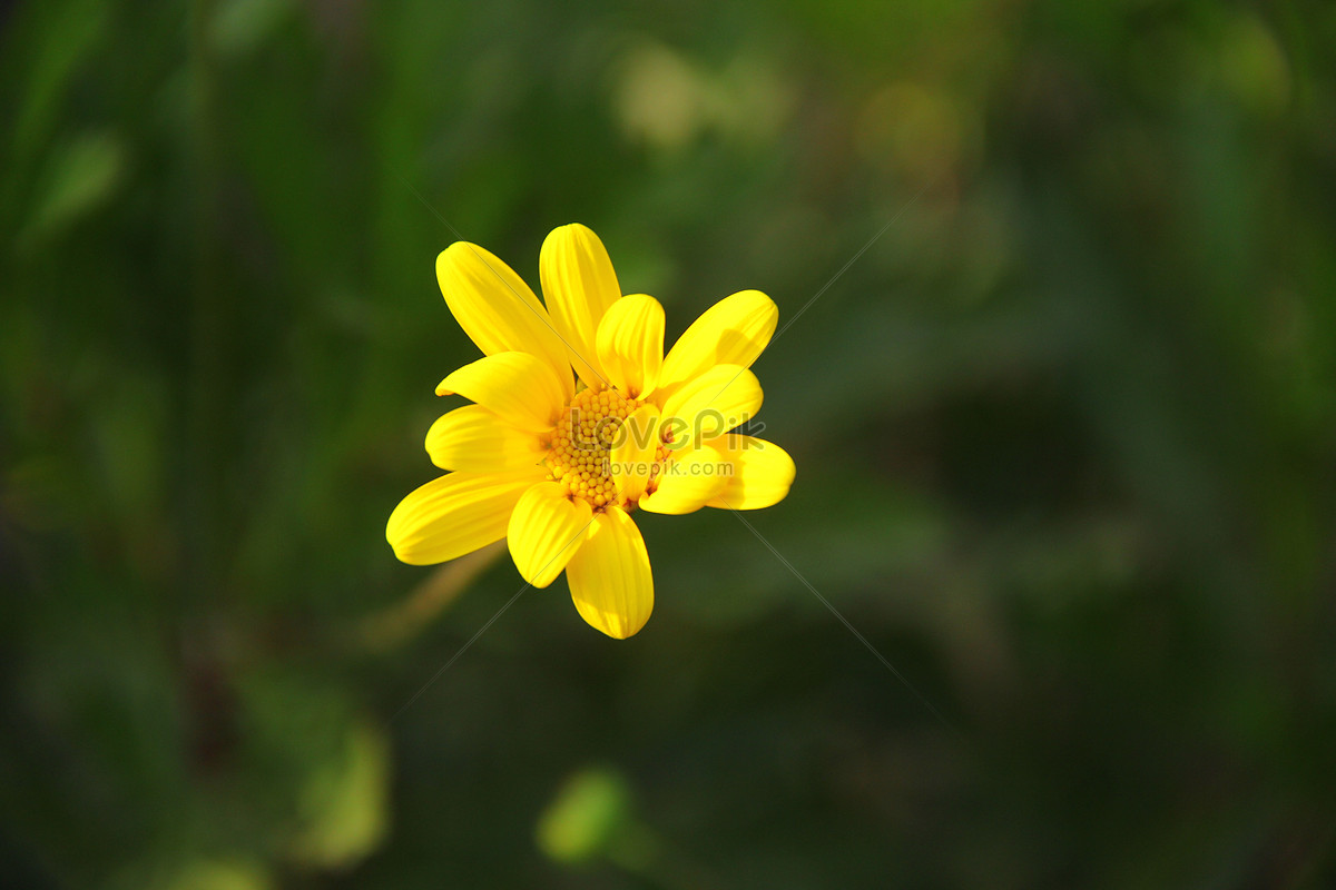 Small Yellow Flowers Photo Imagepicture Free Download
