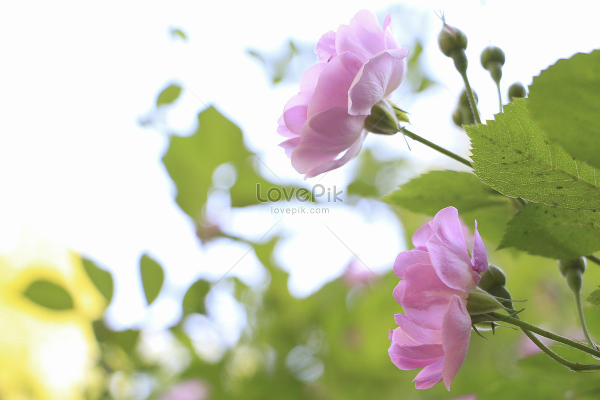 Beautiful Flowers And Trees Photo Imagepicture Free Download