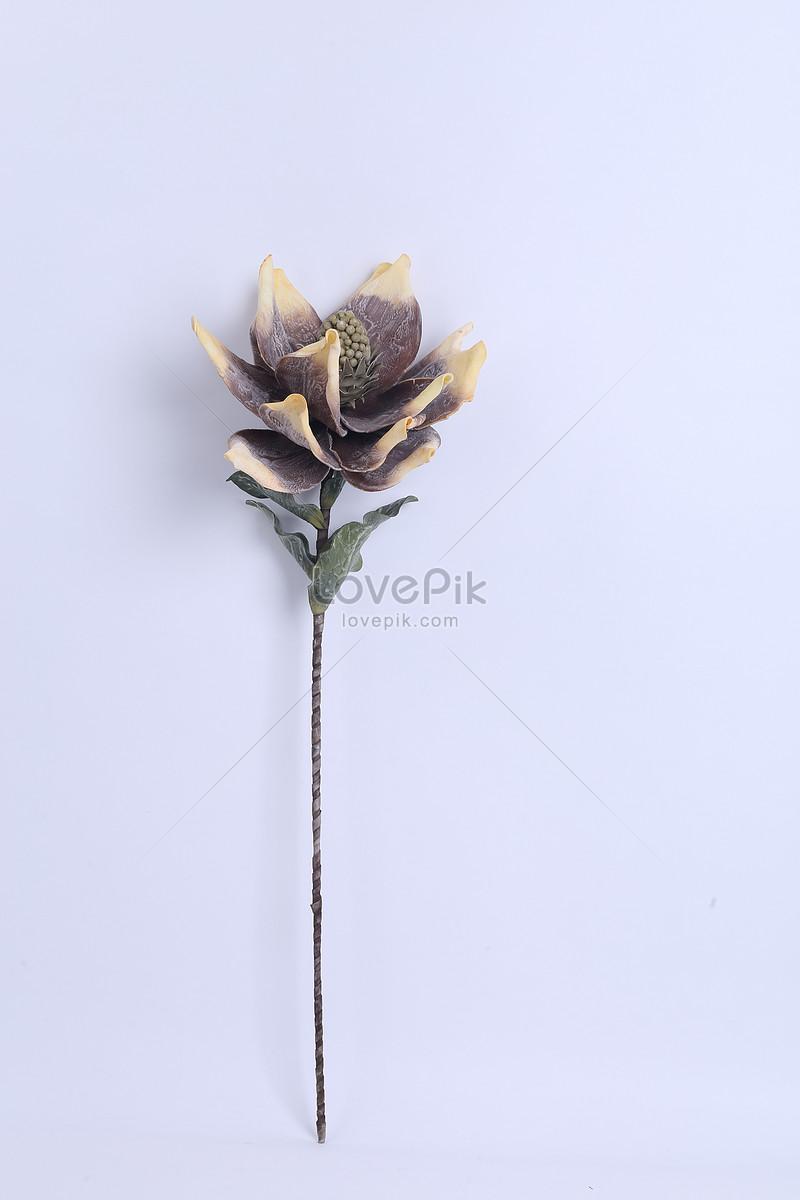 Tek çiçek Malzemesi Resimfotoğraf Numarası 500515109trlovepikcom