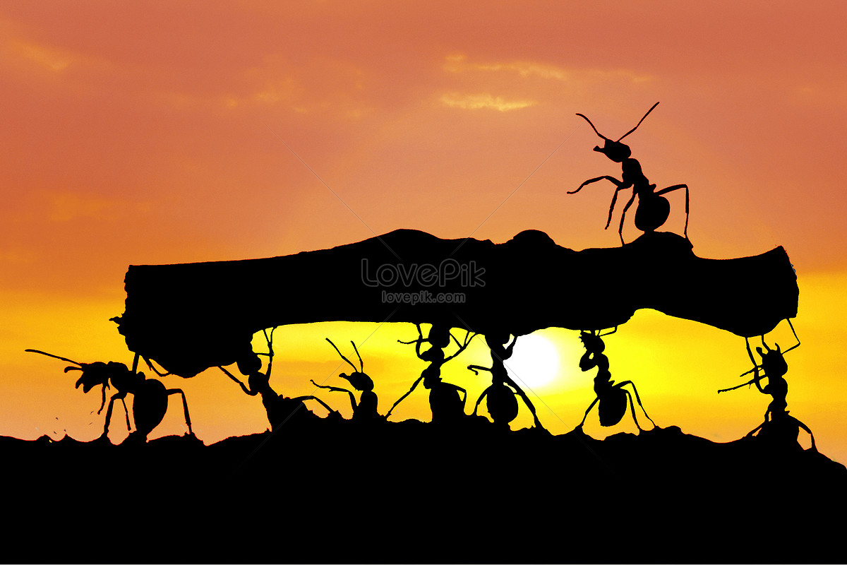 tree ant ile ilgili görsel sonucu