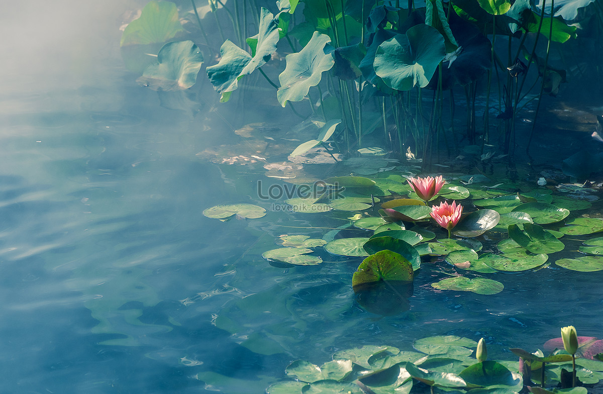 A girl in the lotus pond illustration image_picture free download.