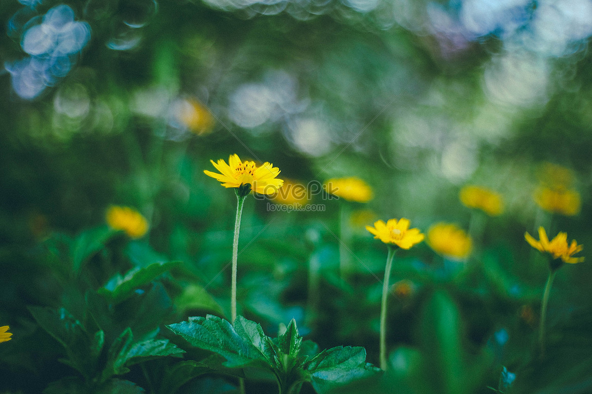 The Flower Fragrance Of Spring Photo Imagepicture Free Download