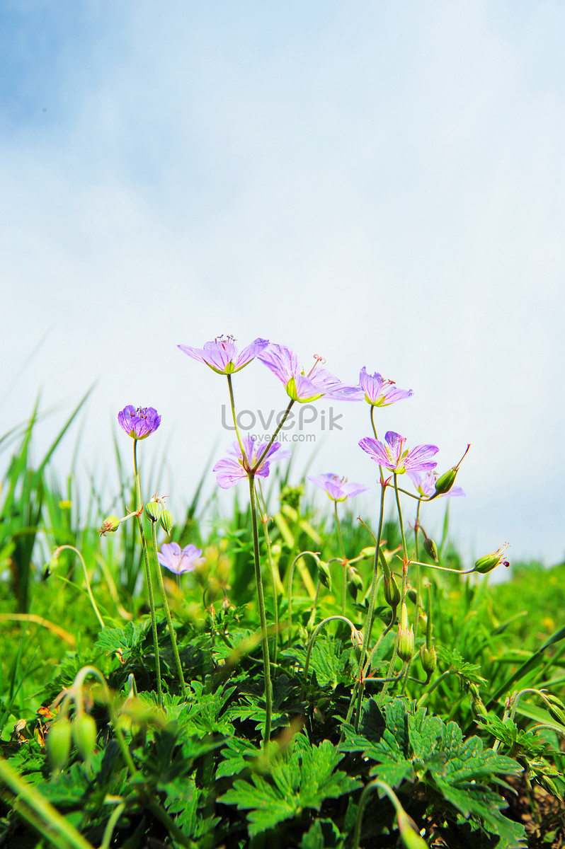 Small Purple Flowers Blooming By The Roadside Photo Imagepicture