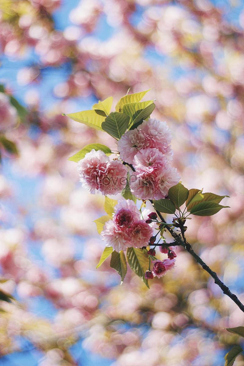 Bahar çiçek Açan çiçekler Resimfotoğraf Numarası 500536429tr