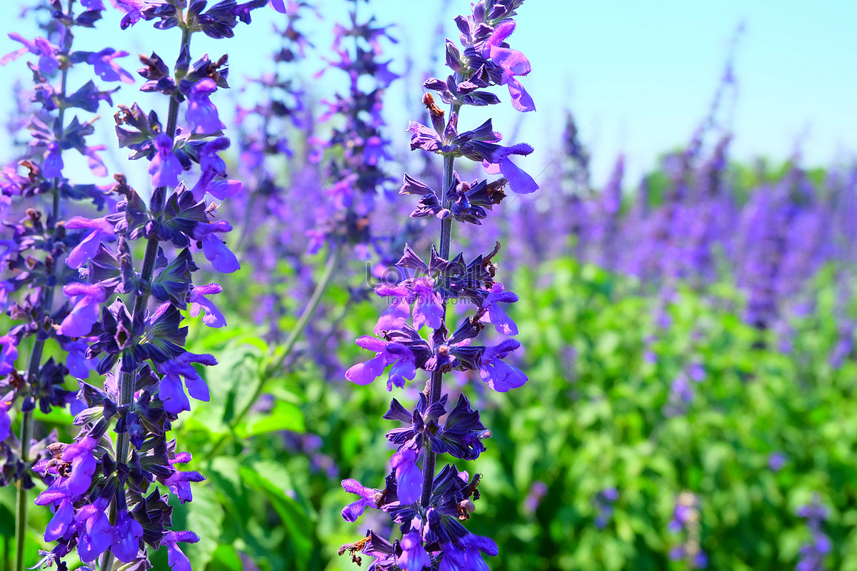 A Small Purple Flower Bush Photo Imagepicture Free Download