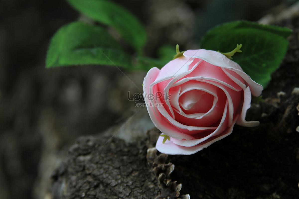 hoa bất tử của tình yêu vĩnh cửu với gỗ mục