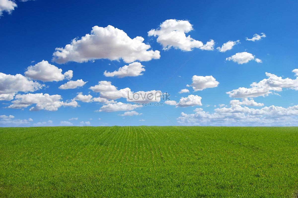 green grass blue sky. green grass, sun and blue sky background