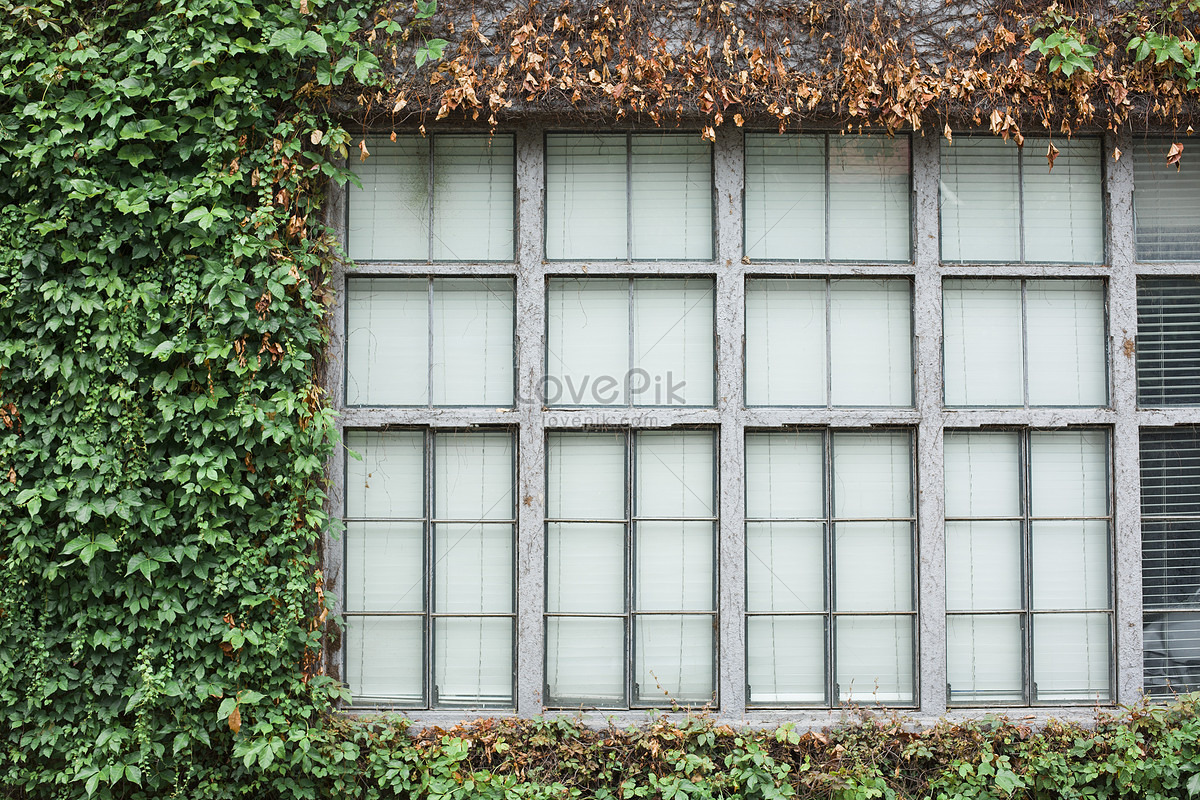 lattice window photo image picture free download 500583348