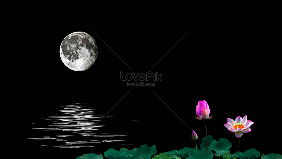 Fresh summer lotus pond illustrations illustration image_picture.