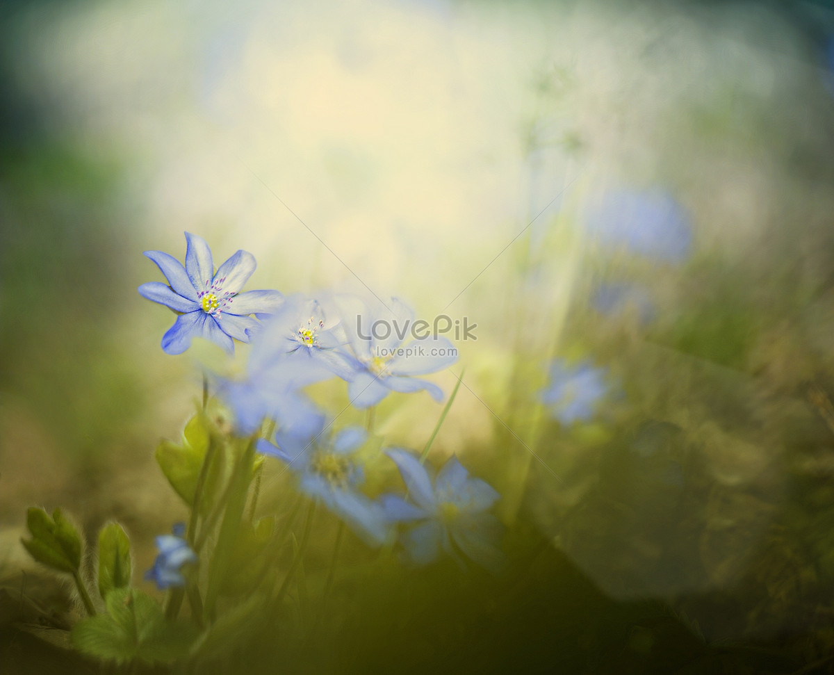 Small blue flowers in the sun photo imagepicture free download small blue flowers in the sun izmirmasajfo
