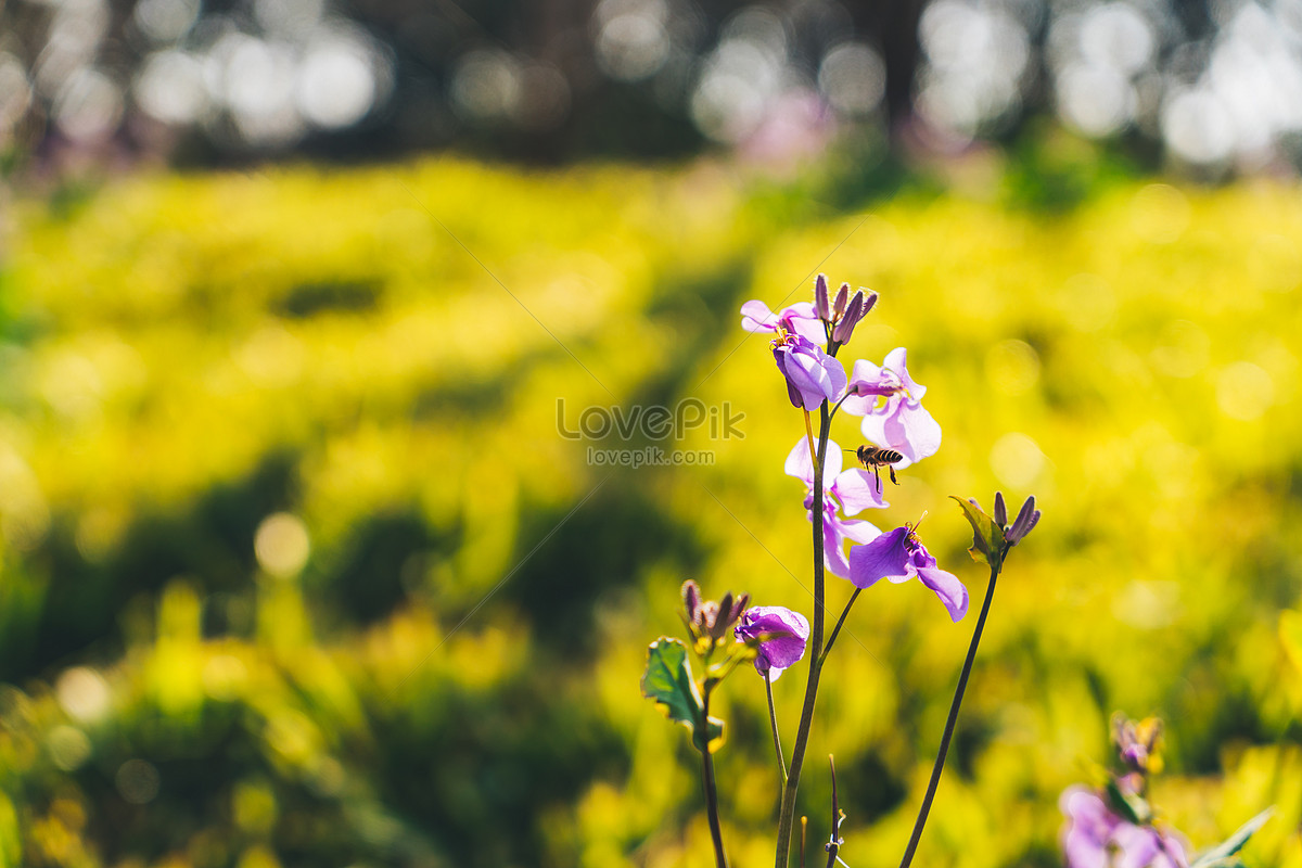 Wild Flowers In The Spring Park Photo Imagepicture Free Download