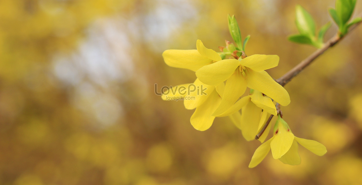 Yellow four petal flower photo imagepicture free download yellow four petal flower mightylinksfo
