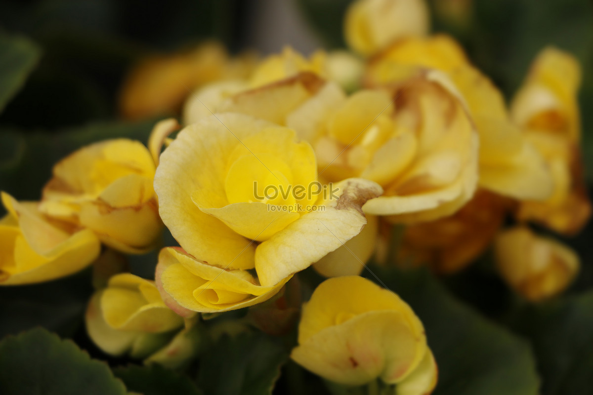 Small yellow flowers in spring photo imagesnature pictures small yellow flowers in spring mightylinksfo