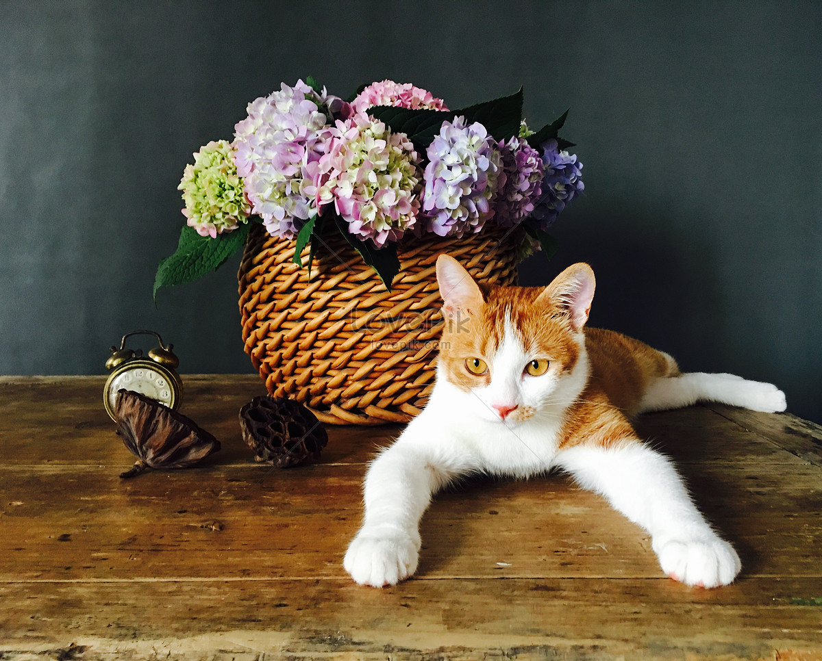 Flowers And Cats Photo Imagepicture Free Download 500867898lovepik