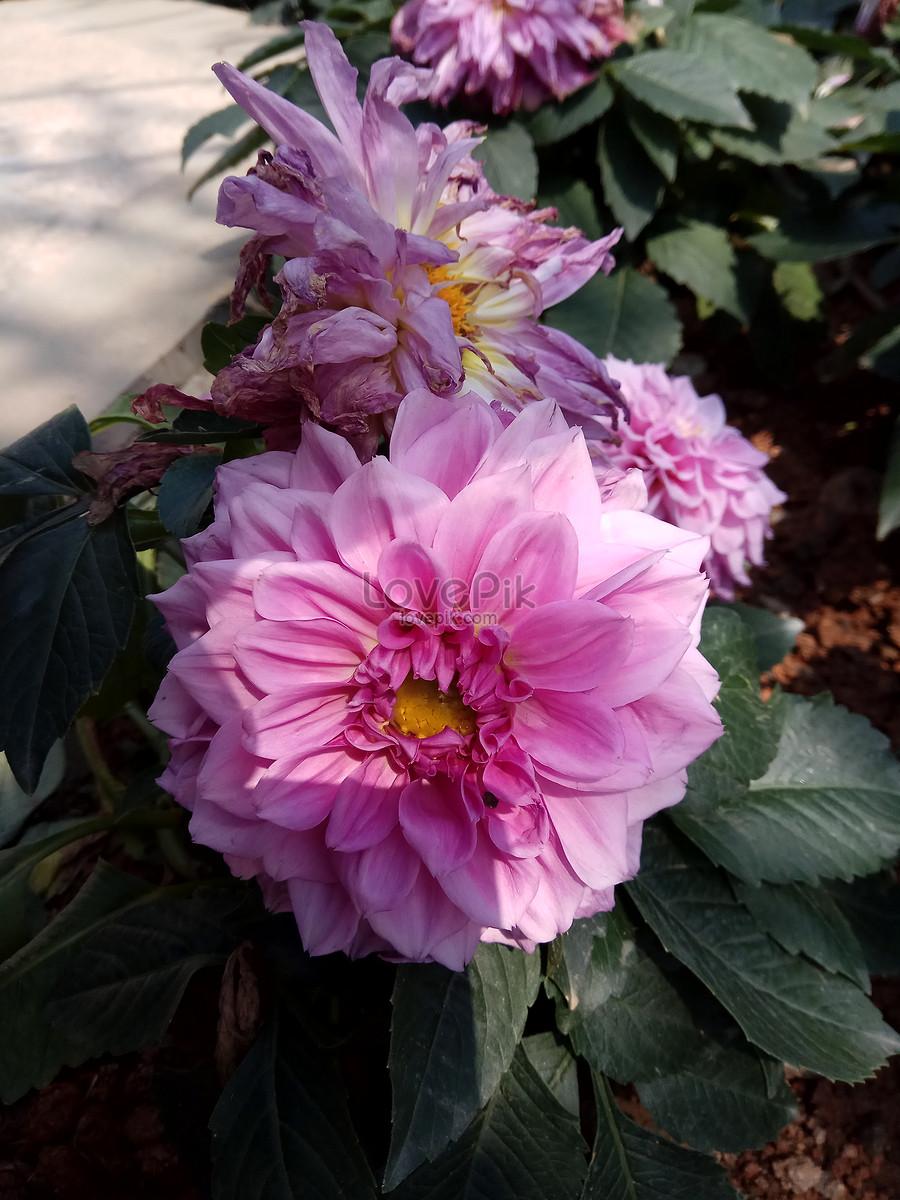 Photo De Fleur Fleur Romantique Photo De Fleur De Printemps Numero