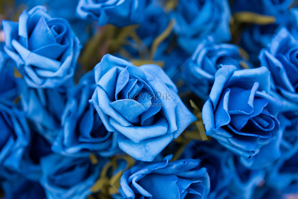Blue Rose Photo Image Picture Free Download 501160850 Lovepik Com